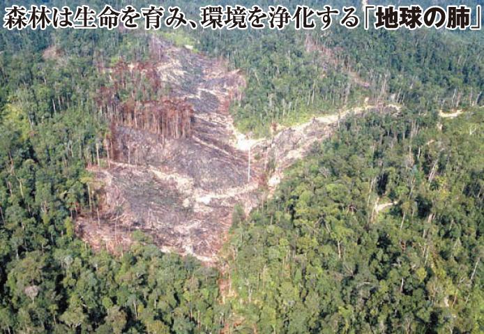 地球から緑が消える、森林破壊から地球を救おう