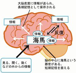 脳の仕組みや働きを考える