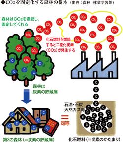 地球温暖化対策と森林再生 環境を守り 災害を防ぐ森林の働き