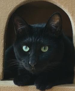 「猫ブーム」の陰で―日本人と猫の歴史から考えるペットとの共生