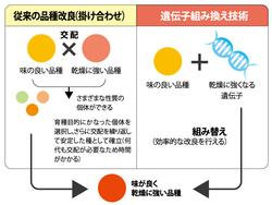 増大する遺伝子組み換え作物