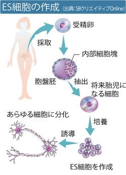 がんや難病は再生医療で克服できるか
